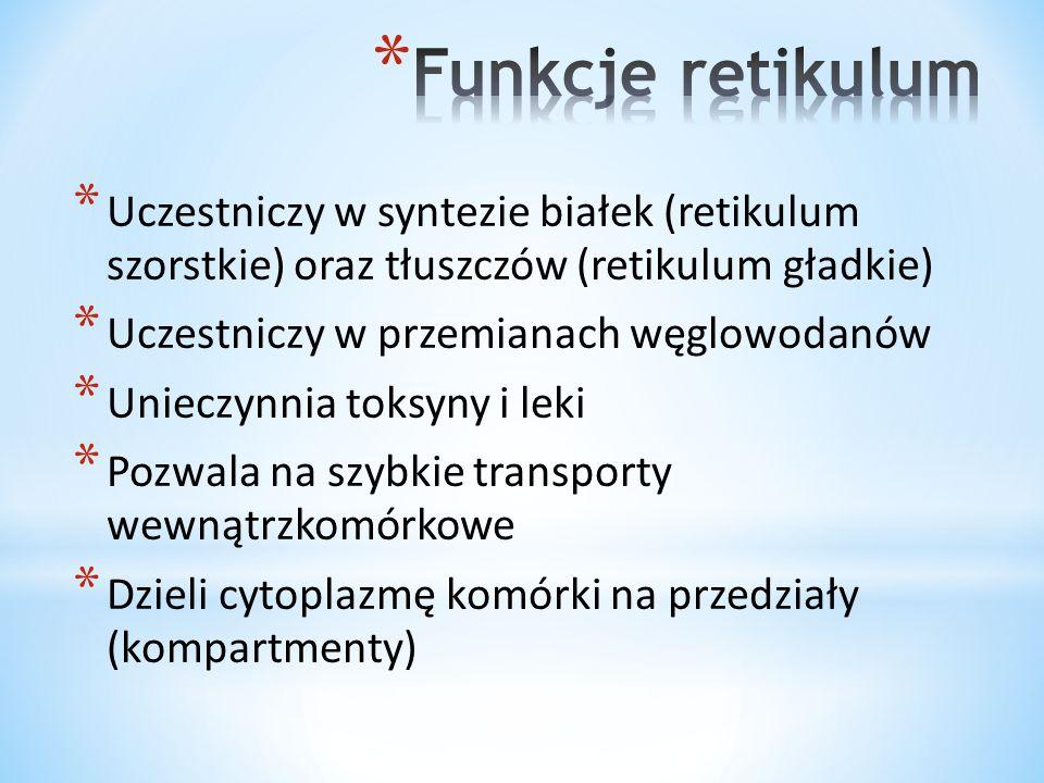 Funkcje retikulum Uczestniczy w syntezie białek (retikulum szorstkie) oraz tłuszczów (retikulum gładkie)