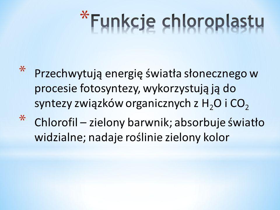 Funkcje chloroplastu Przechwytują energię światła słonecznego w procesie fotosyntezy, wykorzystują ją do syntezy związków organicznych z H2O i CO2.