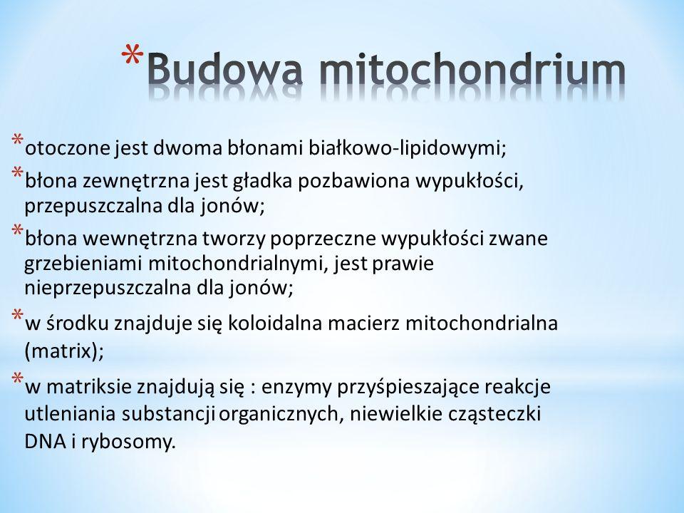 Budowa mitochondrium otoczone jest dwoma błonami białkowo-lipidowymi;