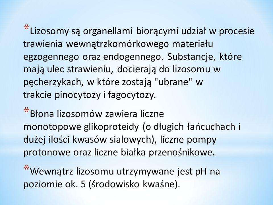 Lizosomy są organellami biorącymi udział w procesie trawienia wewnątrzkomórkowego materiału egzogennego oraz endogennego. Substancje, które mają ulec strawieniu, docierają do lizosomu w pęcherzykach, w które zostają ubrane w trakcie pinocytozy i fagocytozy.