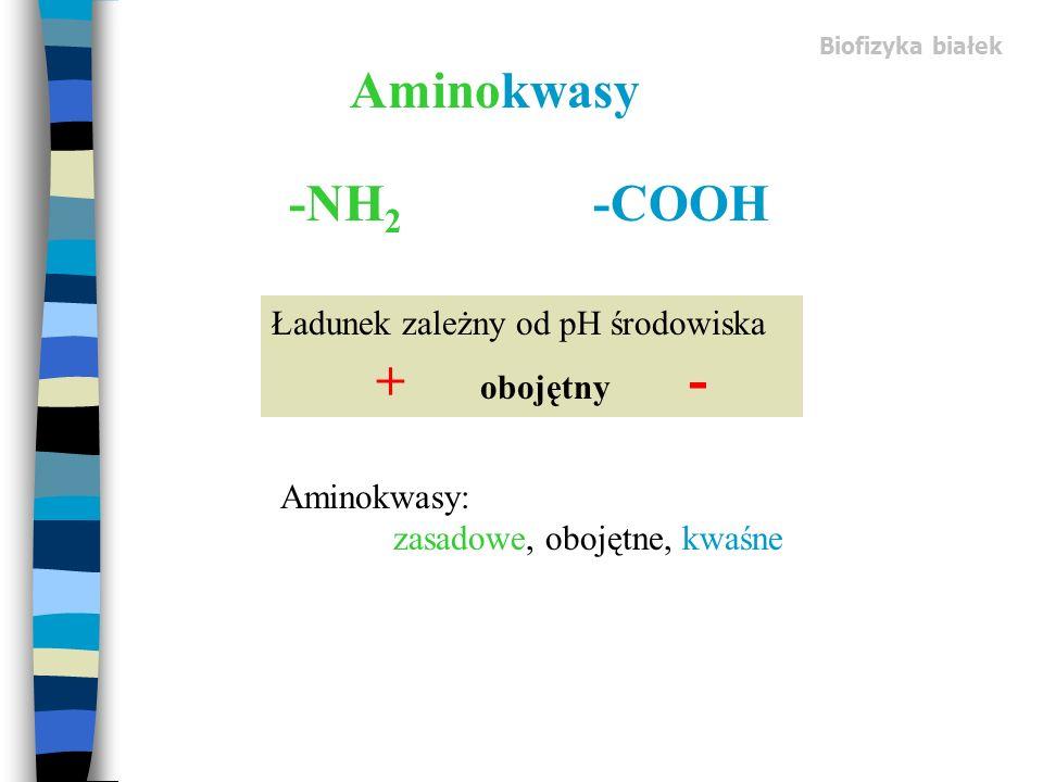 Aminokwasy -NH2 -COOH Ładunek zależny od pH środowiska + obojętny -