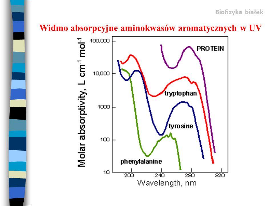 Widmo absorpcyjne aminokwasów aromatycznych w UV