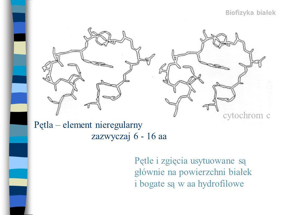 Pętla – element nieregularny zazwyczaj 6 - 16 aa