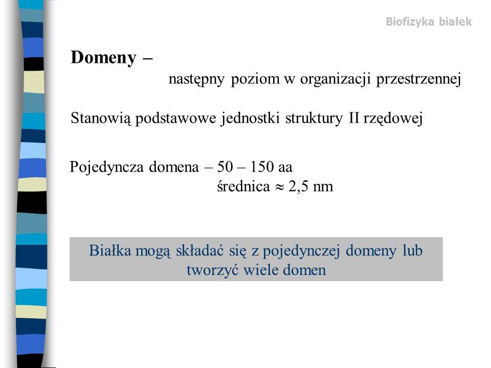 Białka mogą składać się z pojedynczej domeny lub tworzyć wiele domen