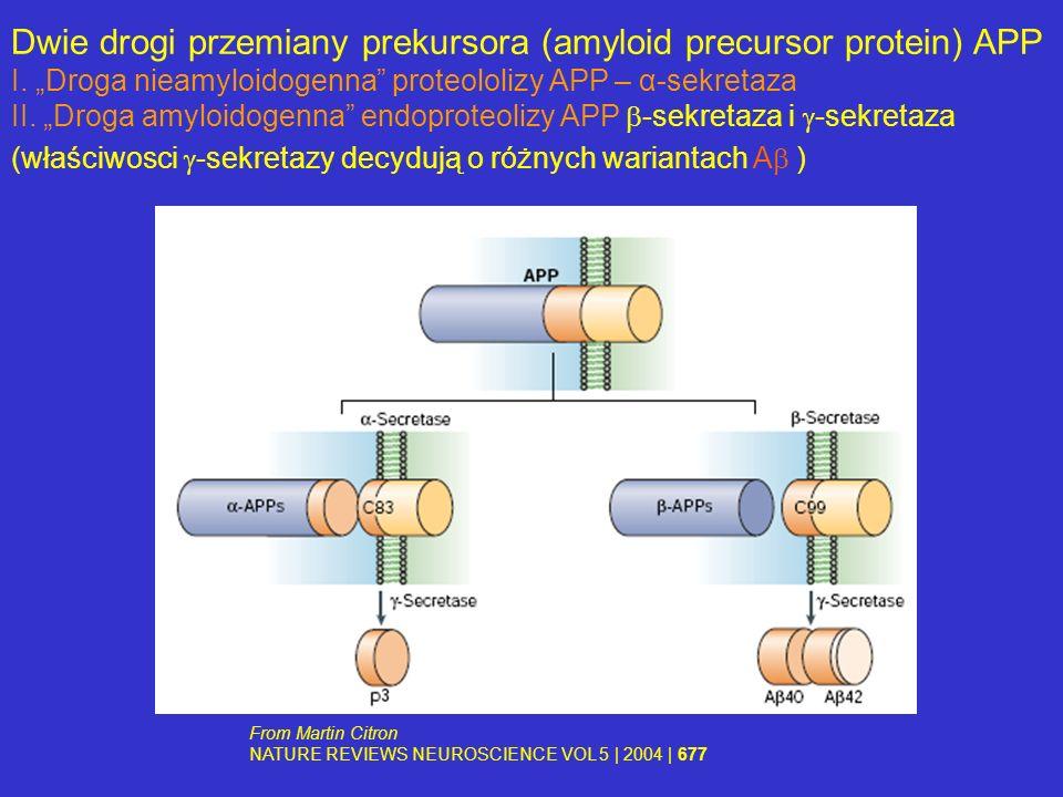 Dwie drogi przemiany prekursora (amyloid precursor protein) APP I