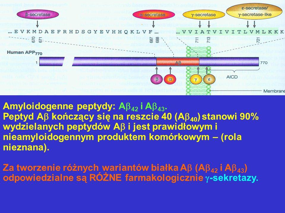 Amyloidogenne peptydy: A42 i A43.