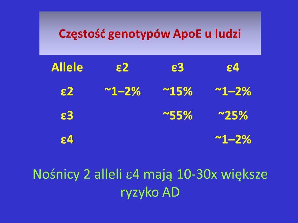 Nośnicy 2 alleli 4 mają 10-30x większe ryzyko AD