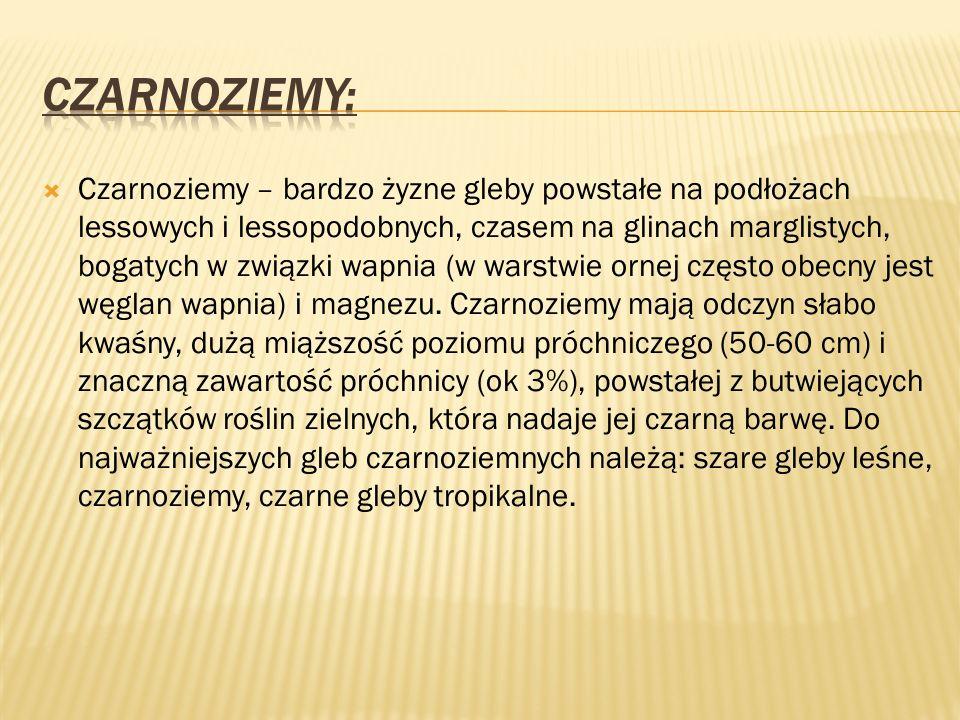 Czarnoziemy: