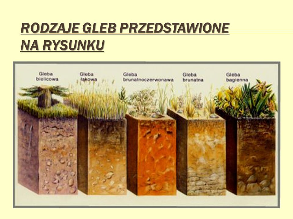 Rodzaje gleb przedstawione na rysunku
