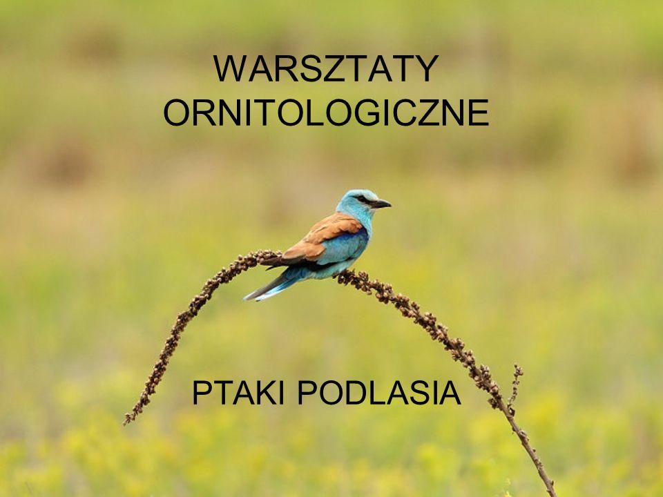 WARSZTATY ORNITOLOGICZNE PTAKI PODLASIA
