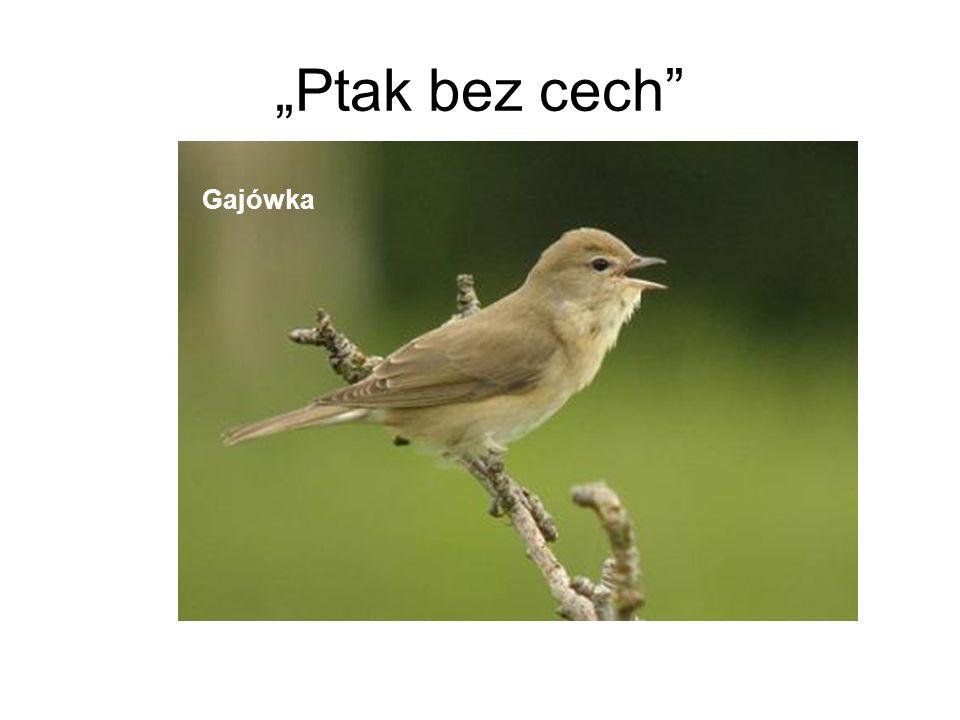 """""""Ptak bez cech Gajówka"""