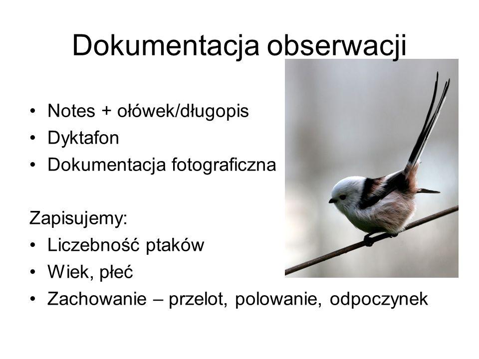 Dokumentacja obserwacji