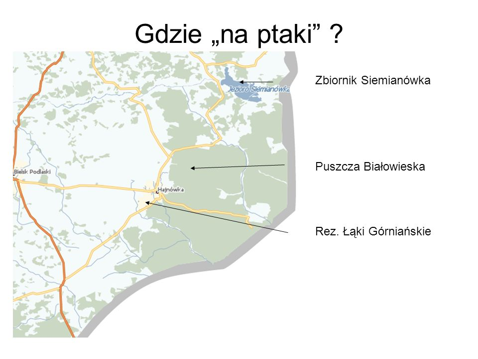 """Gdzie """"na ptaki Zbiornik Siemianówka Puszcza Białowieska"""