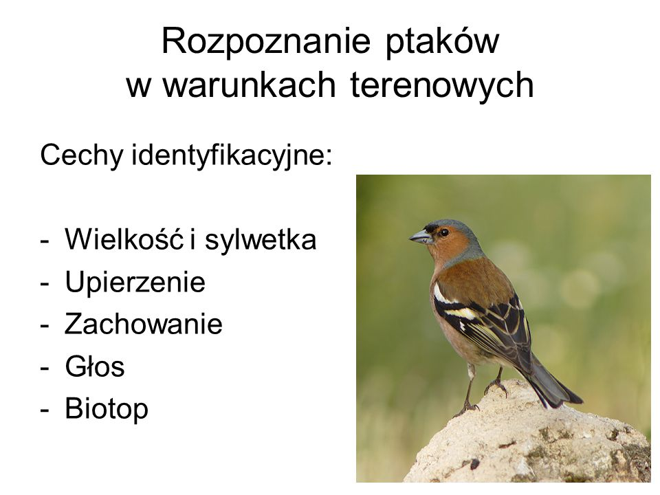 Rozpoznanie ptaków w warunkach terenowych