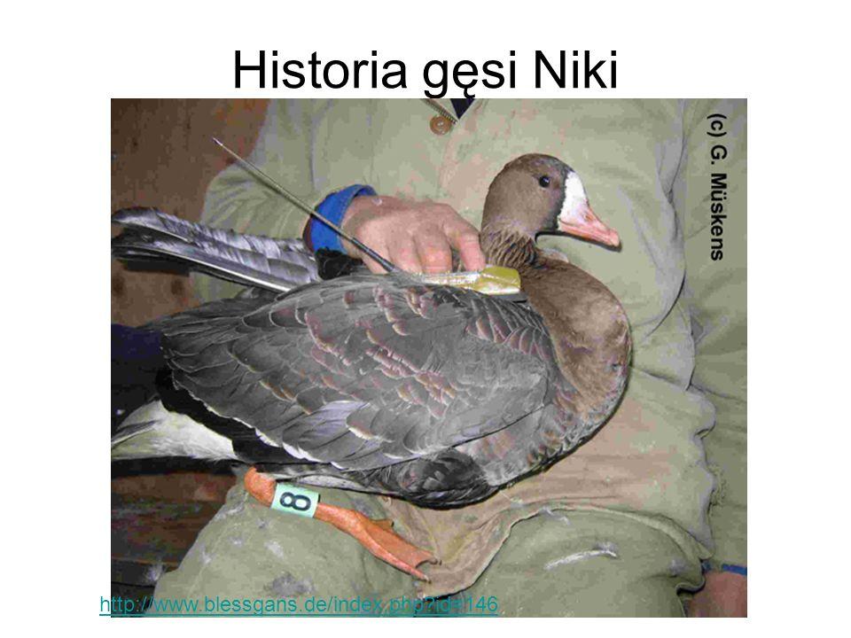 Historia gęsi Niki http://www.blessgans.de/index.php id=146
