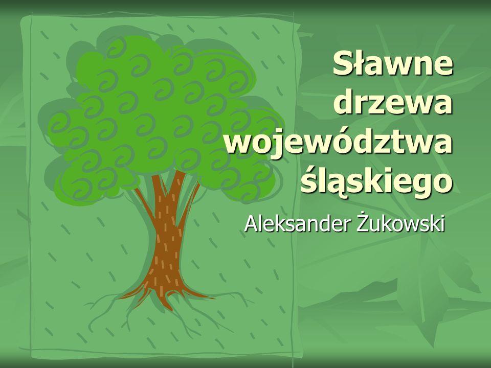 Sławne drzewa województwa śląskiego