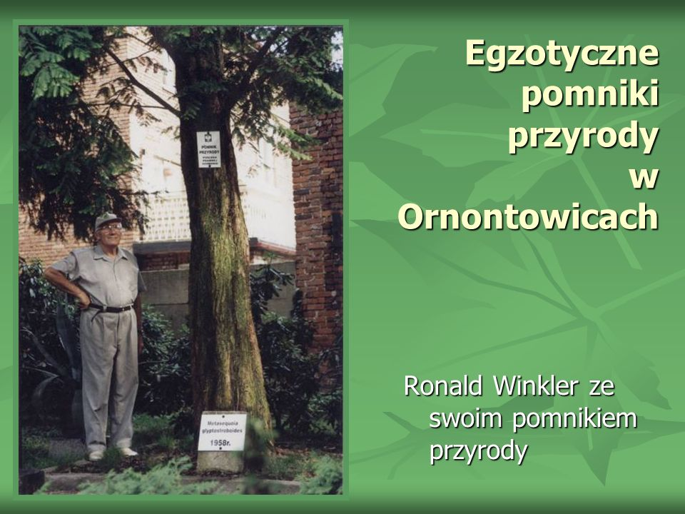 Egzotyczne pomniki przyrody w Ornontowicach