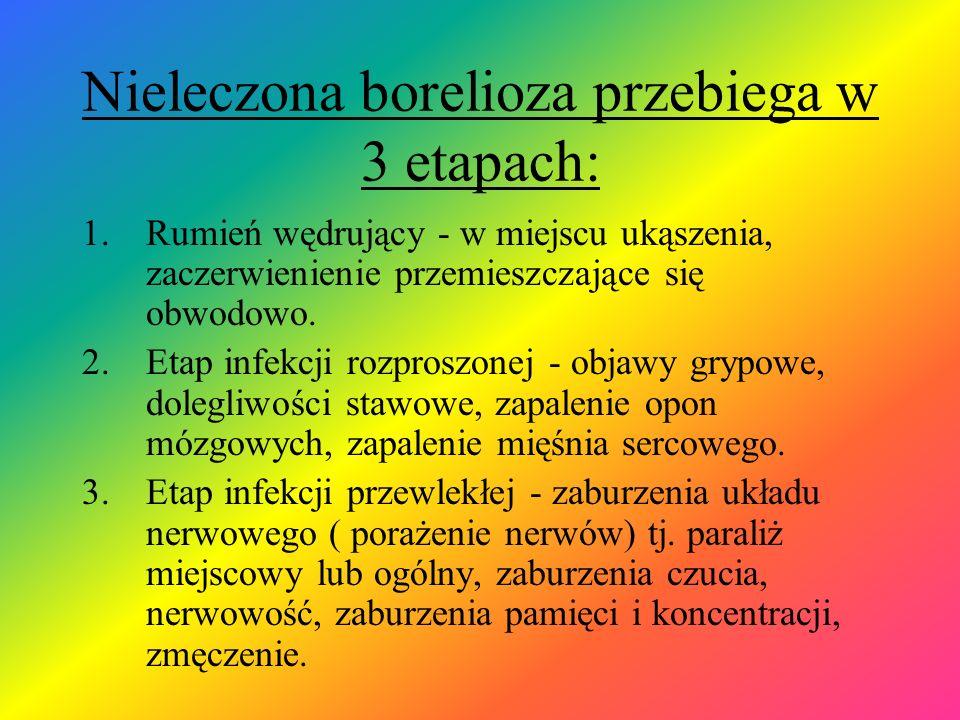 Nieleczona borelioza przebiega w 3 etapach: