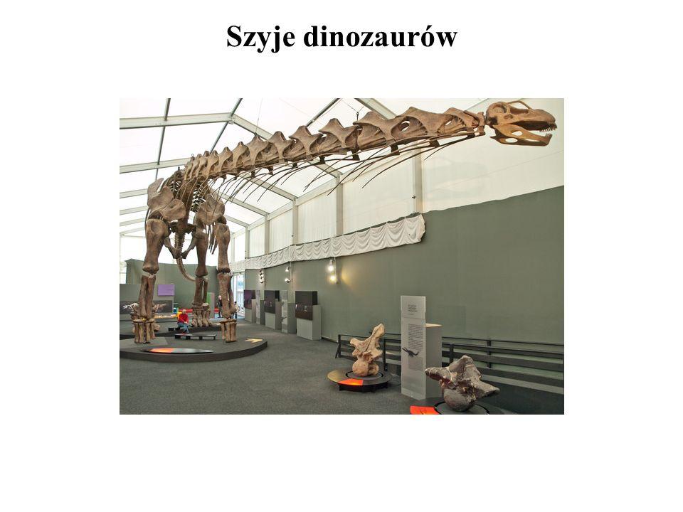 Szyje dinozaurów