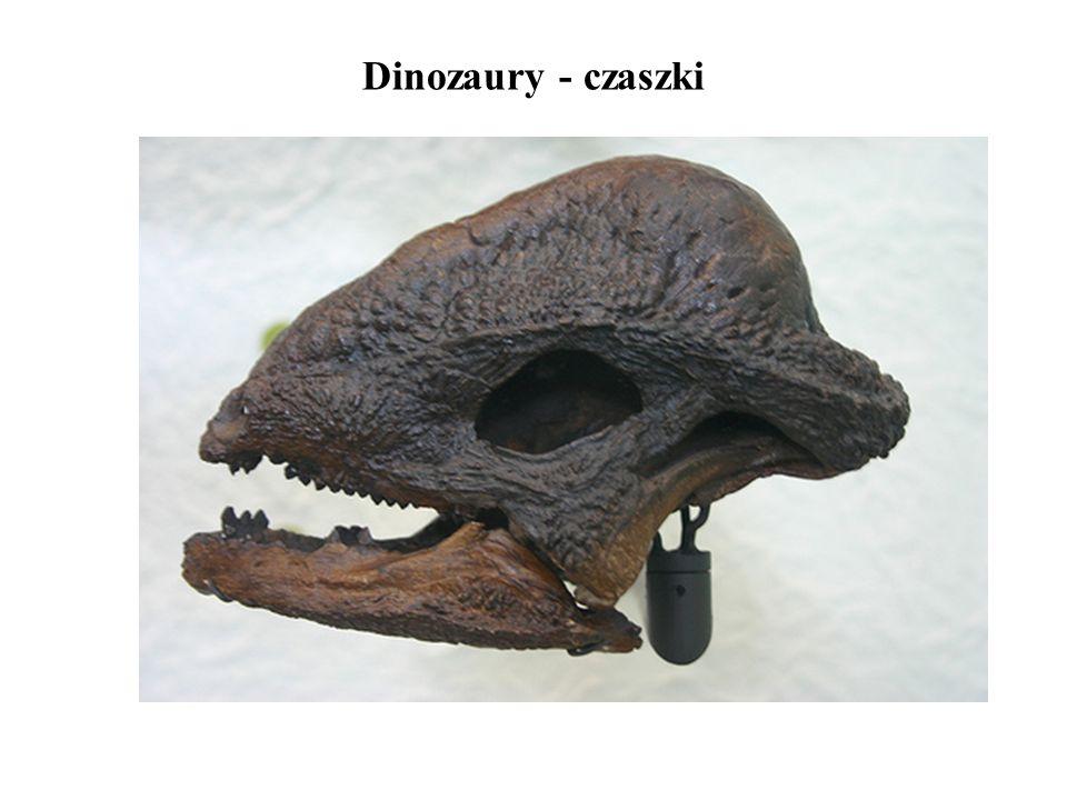 Dinozaury - czaszki