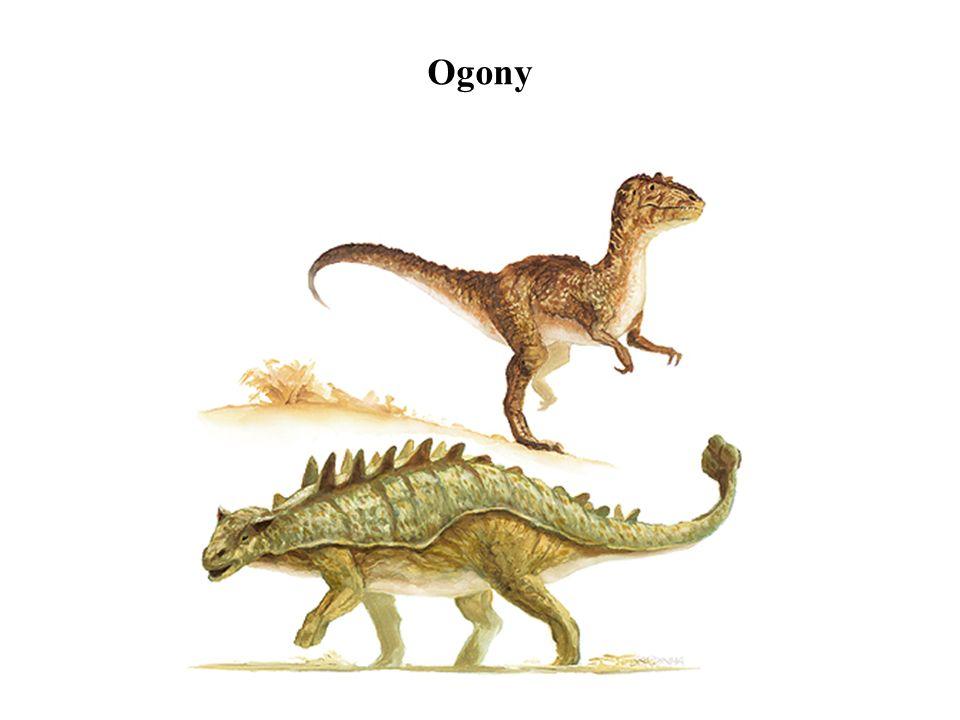 Ogony