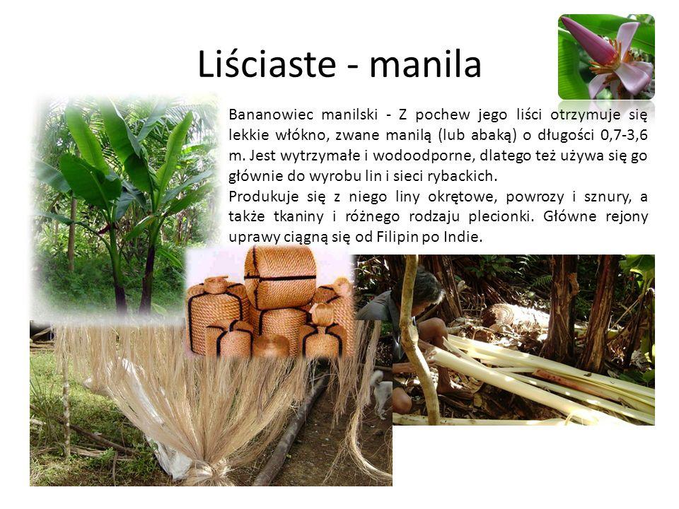 Liściaste - manila