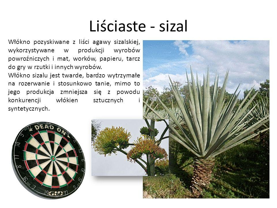 Liściaste - sizal