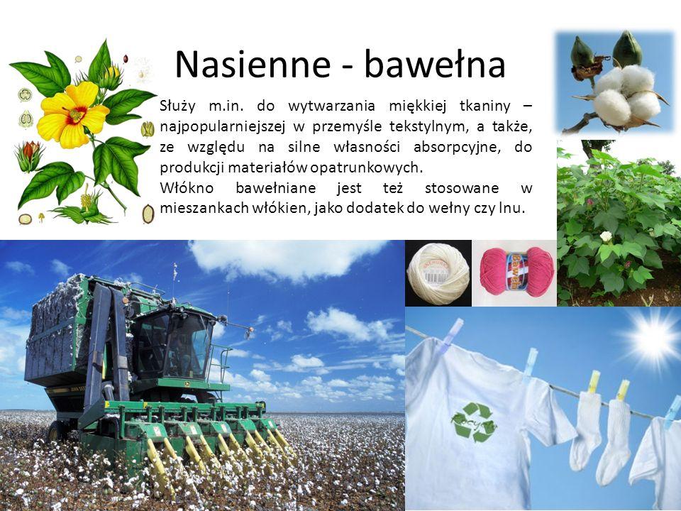 Nasienne - bawełna