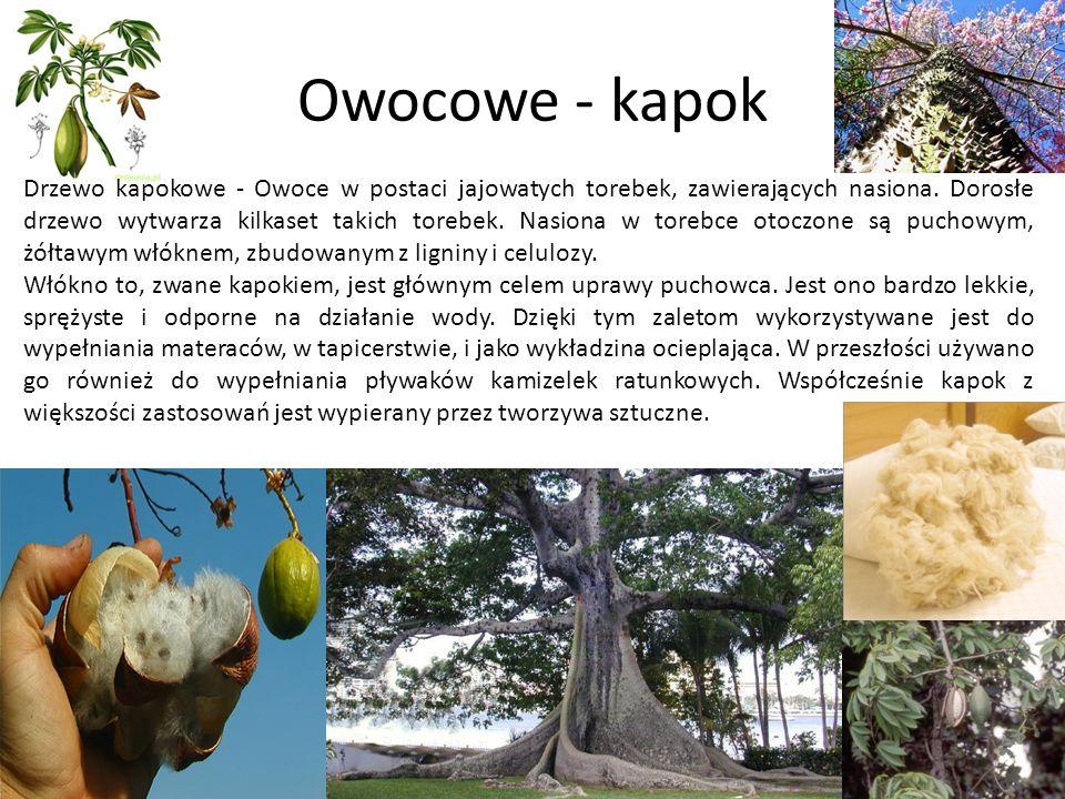 Owocowe - kapok