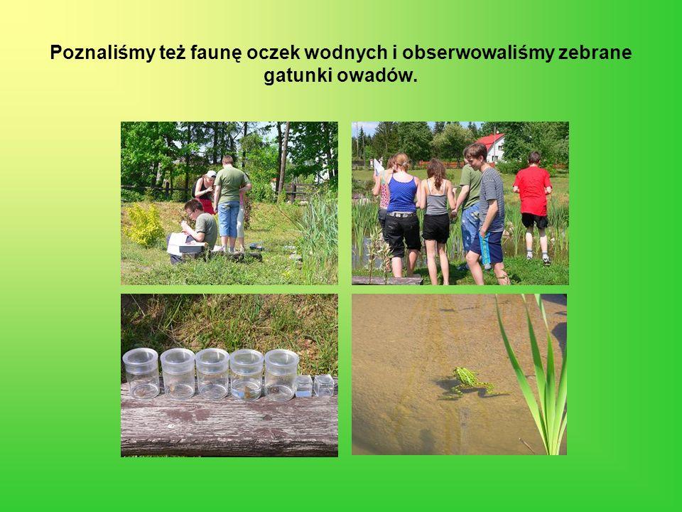Poznaliśmy też faunę oczek wodnych i obserwowaliśmy zebrane gatunki owadów.