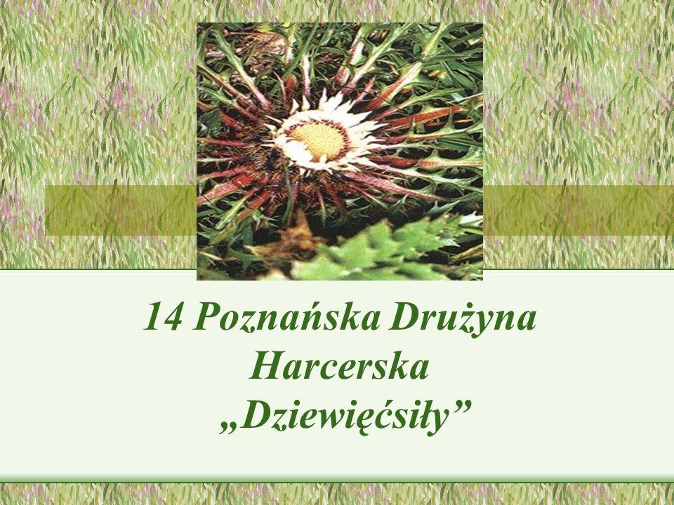 14 Poznańska Drużyna Harcerska