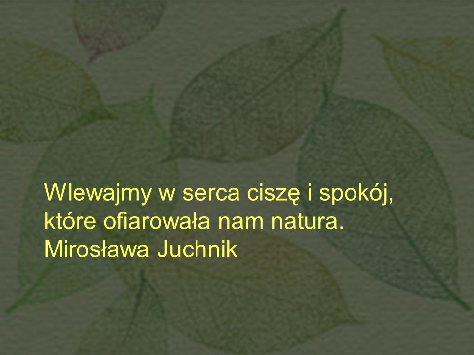 Wlewajmy w serca ciszę i spokój, które ofiarowała nam natura.