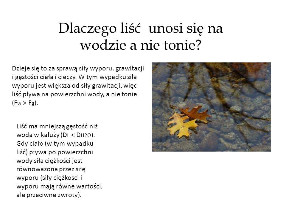 Dlaczego liść unosi się na wodzie a nie tonie