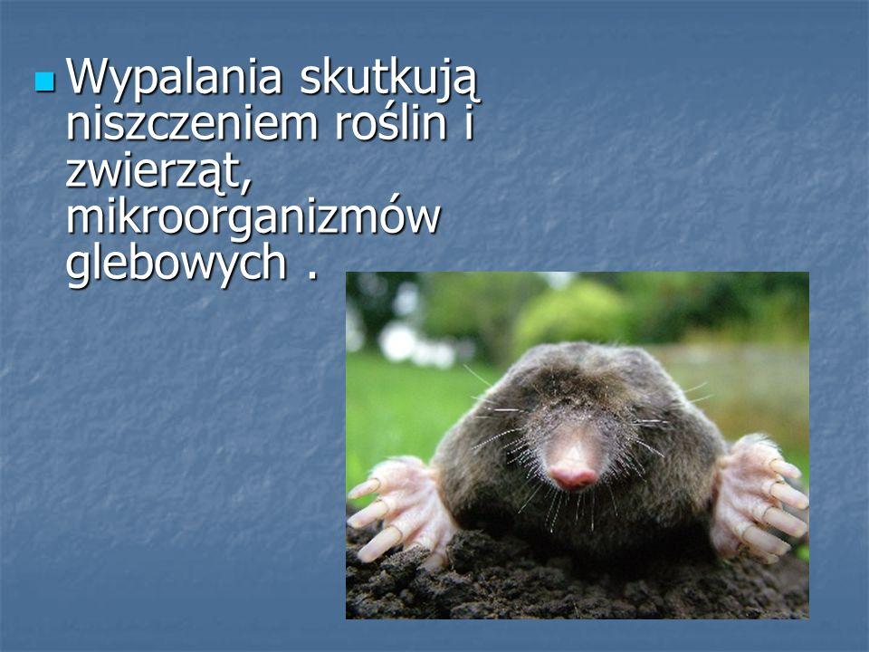 Wypalania skutkują niszczeniem roślin i zwierząt, mikroorganizmów glebowych .