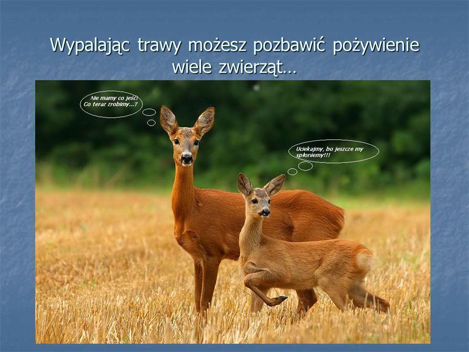 Wypalając trawy możesz pozbawić pożywienie wiele zwierząt…