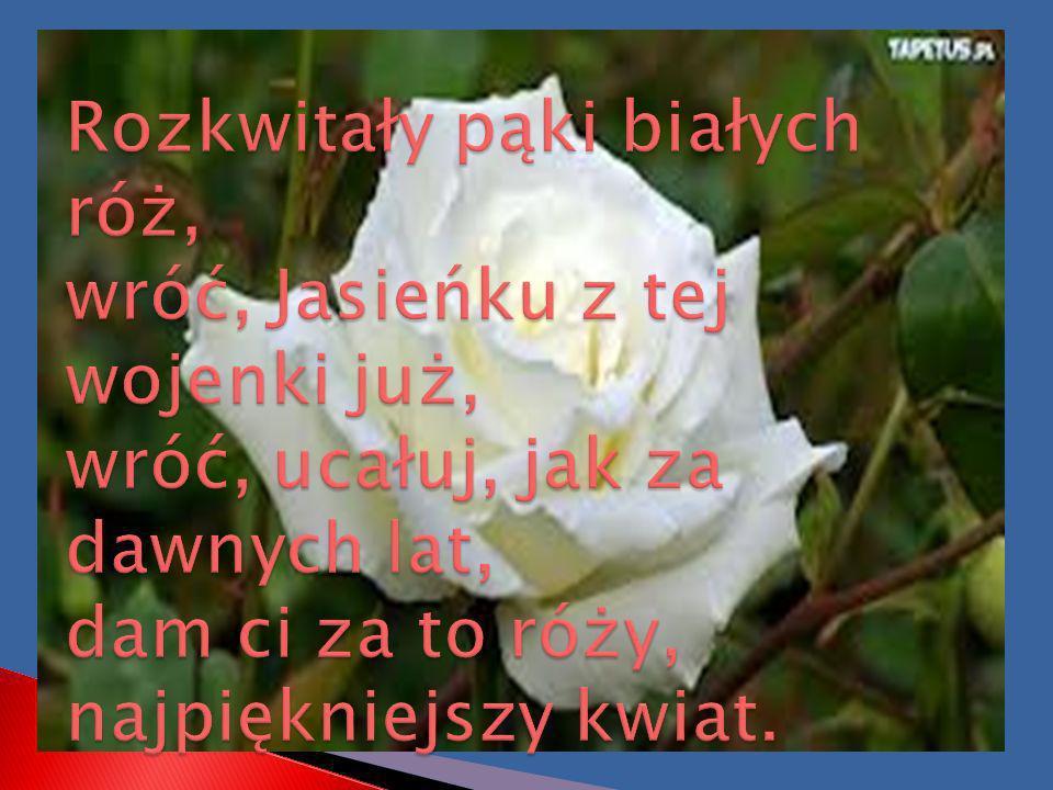 Rozkwitały pąki białych róż, wróć, Jasieńku z tej wojenki już, wróć, ucałuj, jak za dawnych lat, dam ci za to róży, najpiękniejszy kwiat.