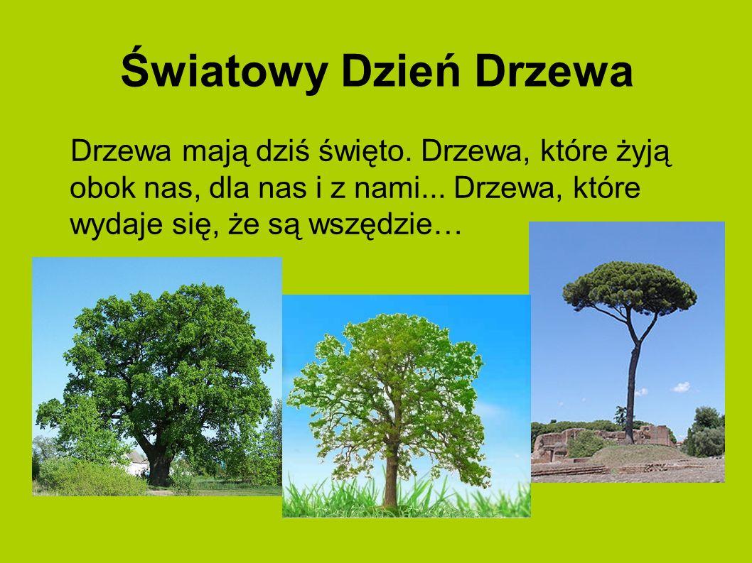 Światowy Dzień Drzewa Drzewa mają dziś święto. Drzewa, które żyją obok nas, dla nas i z nami...