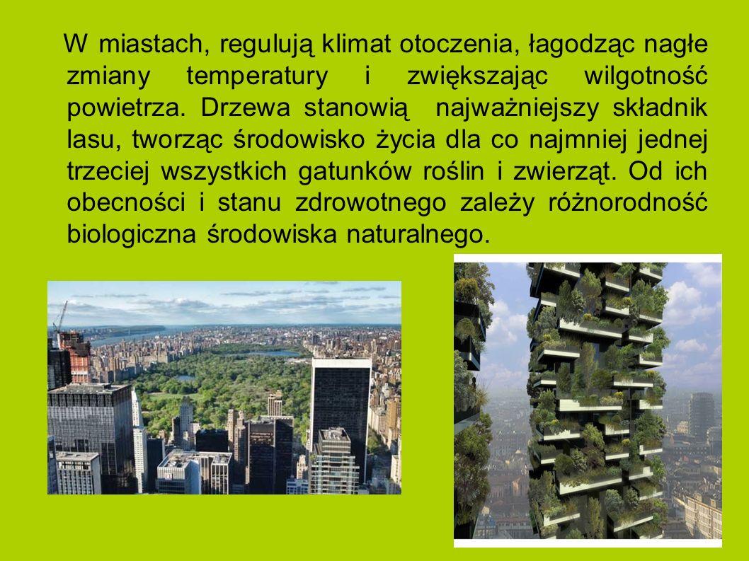 W miastach, regulują klimat otoczenia, łagodząc nagłe zmiany temperatury i zwiększając wilgotność powietrza.