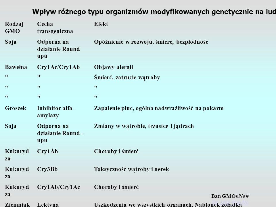 Wpływ różnego typu organizmów modyfikowanych genetycznie na ludzi i zwierzęta.