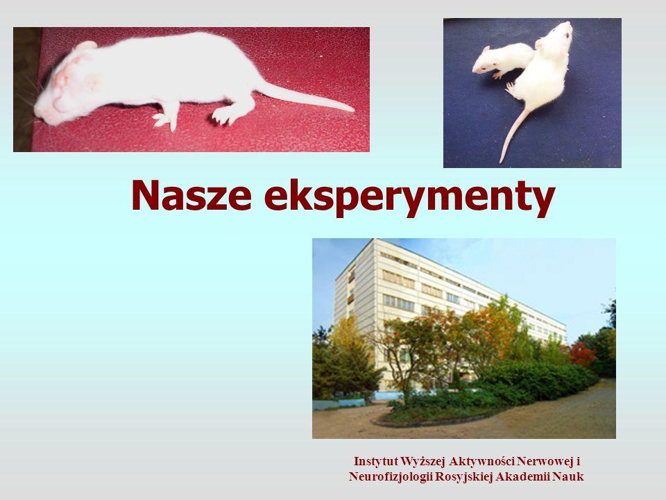 Nasze eksperymenty Instytut Wyższej Aktywności Nerwowej i Neurofizjologii Rosyjskiej Akademii Nauk