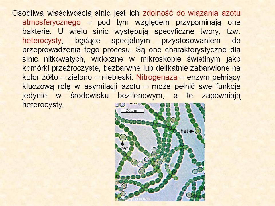 Osobliwą właściwością sinic jest ich zdolność do wiązania azotu atmosferycznego – pod tym względem przypominają one bakterie.