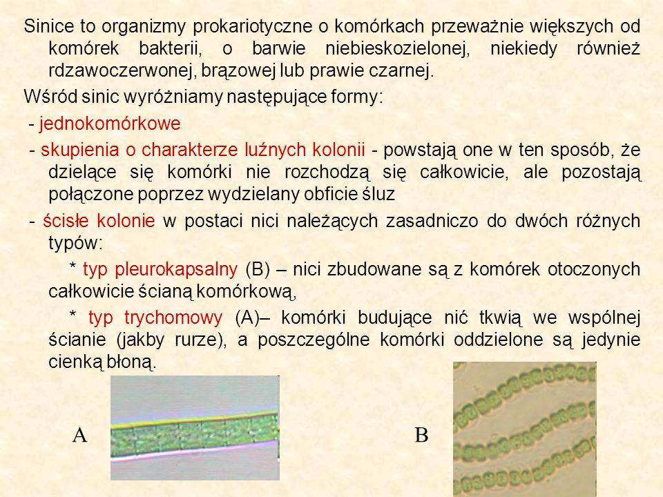 Sinice to organizmy prokariotyczne o komórkach przeważnie większych od komórek bakterii, o barwie niebieskozielonej, niekiedy również rdzawoczerwonej, brązowej lub prawie czarnej.
