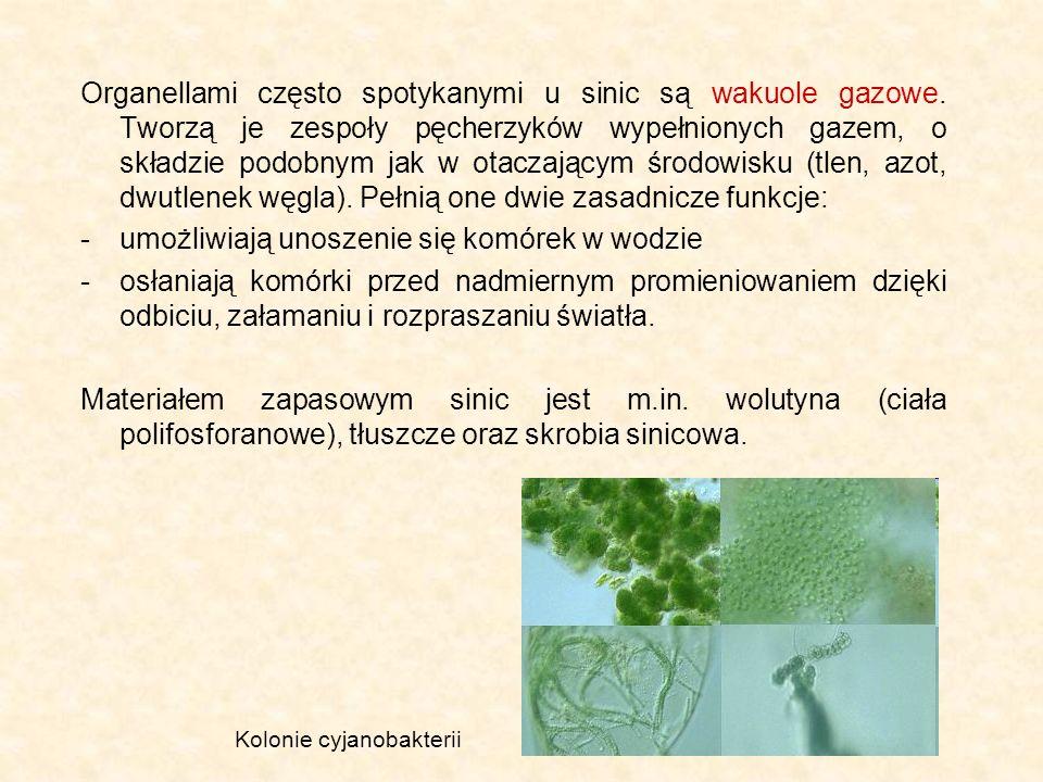 umożliwiają unoszenie się komórek w wodzie