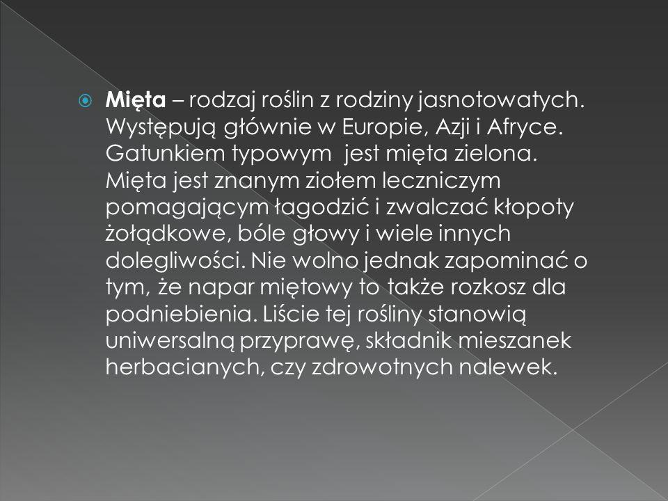 Mięta – rodzaj roślin z rodziny jasnotowatych