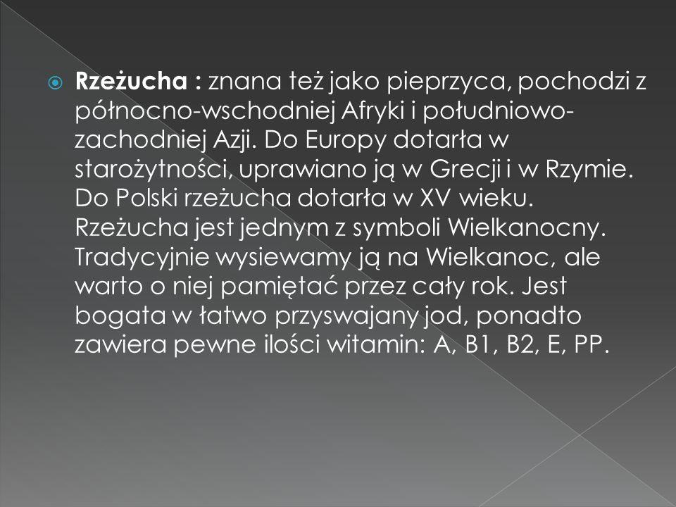 Rzeżucha : znana też jako pieprzyca, pochodzi z północno-wschodniej Afryki i południowo-zachodniej Azji.
