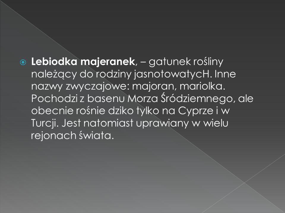 Lebiodka majeranek, – gatunek rośliny należący do rodziny jasnotowatycH.