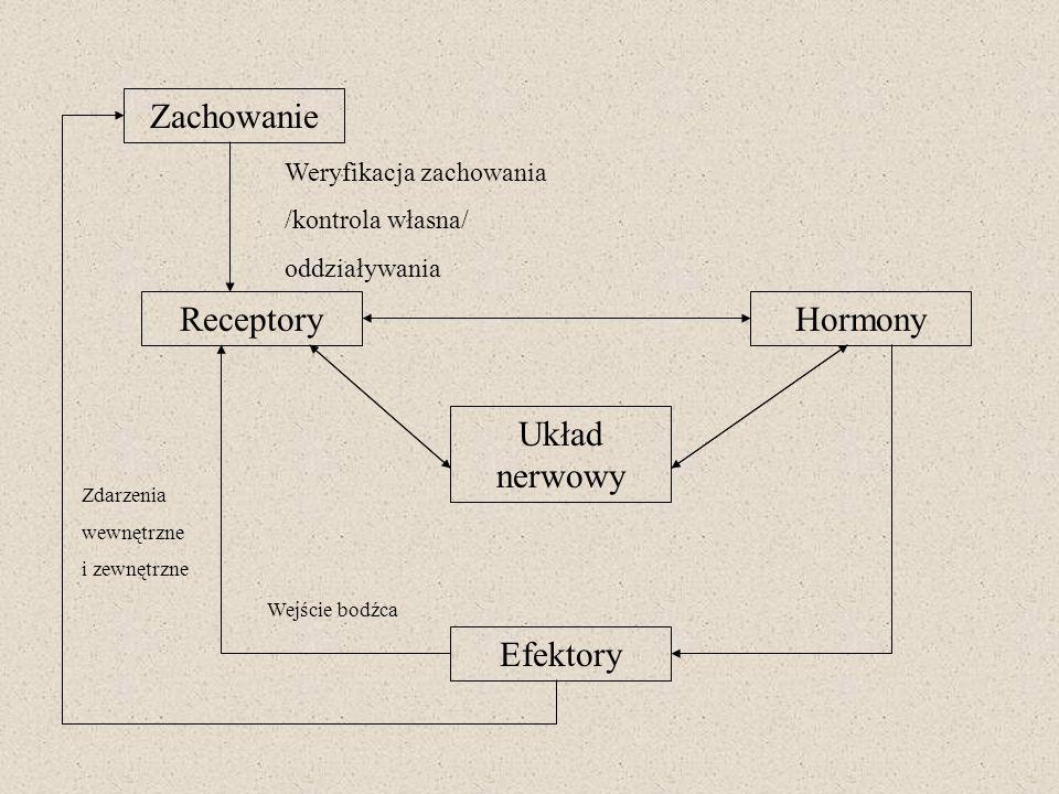 Zachowanie Receptory Hormony Układ nerwowy Efektory