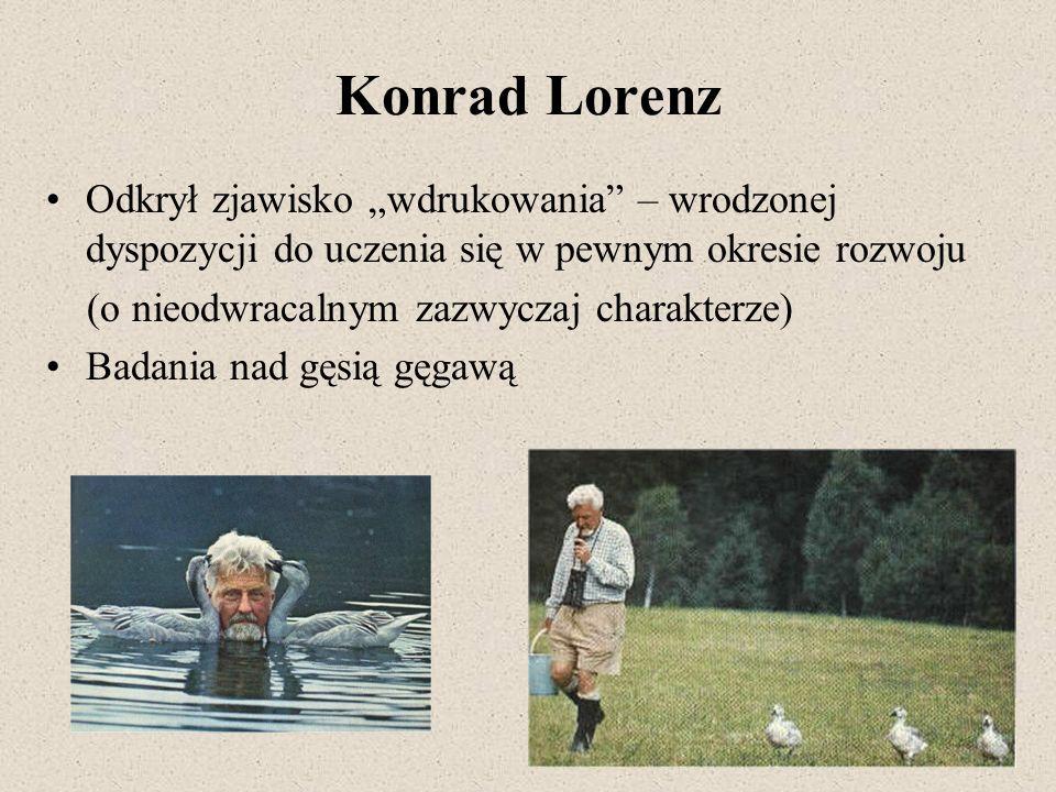 """Konrad Lorenz Odkrył zjawisko """"wdrukowania – wrodzonej dyspozycji do uczenia się w pewnym okresie rozwoju."""