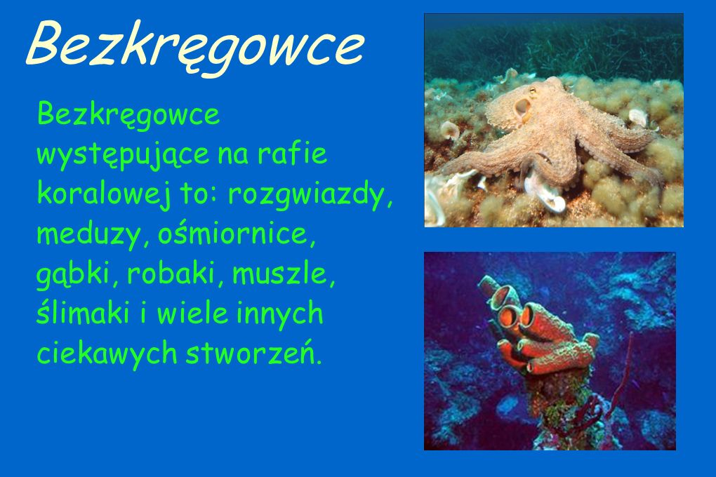 Bezkręgowce Bezkręgowce występujące na rafie koralowej to: rozgwiazdy, meduzy, ośmiornice, gąbki, robaki, muszle,
