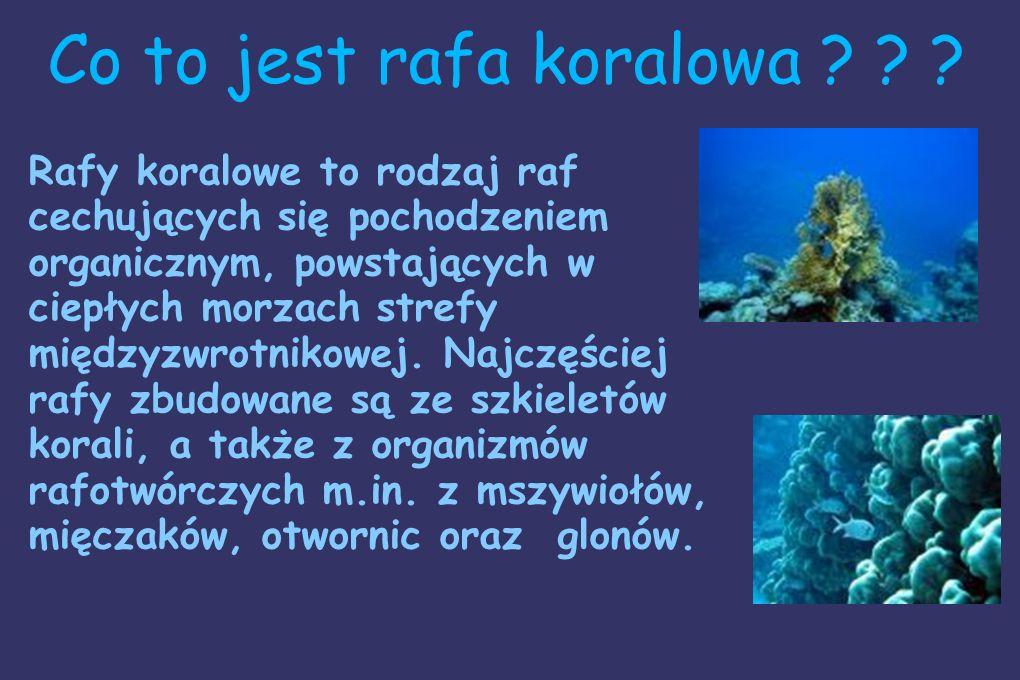 Co to jest rafa koralowa